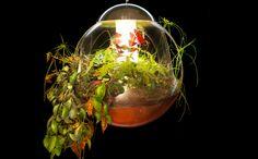 lampe végétale de Alexis Tricoire. Diamètre 50cm