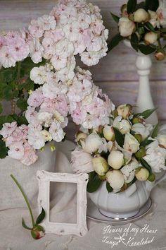 PAC Viva Madelein.Цветы махровые, большие, сливочно-белого цвета с зеленцой и розоватым свечением изнутри. Листья зеленого цвета.