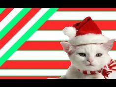 FUNNY CAT VIDEOS PART 9