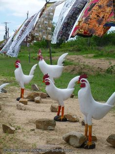 Chicken curios_Hazyview_SA VI South Africa Wildlife, South African Recipes, Diversity, This Is Us, Tours, Chicken, Country, Animals, Beautiful