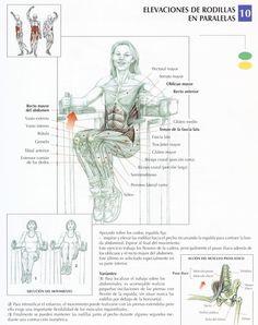 Elevación de rodillas en paralelas