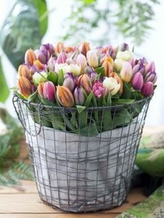 Arrangieren Sie die Tulpen in einem Drahtkorb und setzen Sie die Deko in Szene!