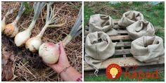 Perfektné nápady do každej záhrady. Container Gardening, Diy Crafts, Vegetables, Yard, Content, Ideas, Garden Beds, Vegetable Garden, Patio