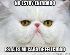 http://statics.cuantogato.com/cgs/2013/03/CG_25846_tiene_pinta_de_ser_un_pariente_lejano_de_grumpy_cat.jpg