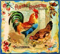 Riverside Royal Rooster Chicken Chickens Orange by ASLICEINTIME, $9.99