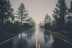 #forest #haze #landscape #mystical #nature #rain #road #trees