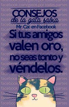 La Gata Sabia Mr Cat, Grumpy Cat, Black Jokes, I Love Cats, Crazy Cats, Cute Cats, Chiste Meme, Neko, Funny Cats
