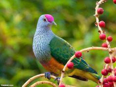 طيور جميلة