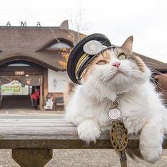 先輩は三毛ネコだった。名前は「たま」。ある地方鉄道の危機を救った、伝説のネコの駅 - Yahoo!ニュース(sippo)