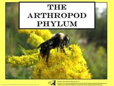 Price $3.00   Spiders, crabs, millipedes, centipedes and more.Have your students learn more about arthropod terminology, types of arthropod life and facts. The Arthropod Phylum task cards can be used as a class game, in cooperative groups or as a science center.