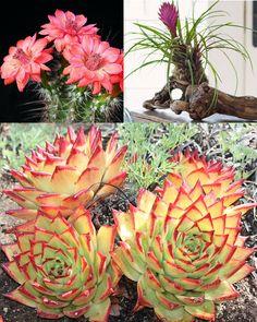 Cultiva suculentas o crasas como un jardinero profesional ecoagricultor.com