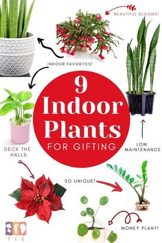 Give the gift of plants this year with these low maintenance indoor plants! From blooming cactus to snake and zz plants, these indoor container plants make the perfect gifts any time of year!
