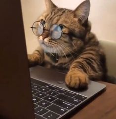 Internet Day is celebrated on October and we can't let this day pass without remembering what made the internet great in the first place--cats! Here's a flashback list featuring five of the most famous original viral cats of all time. Cute Baby Cats, Cute Little Animals, Cute Cats And Kittens, Cute Funny Animals, Kittens Cutest, Cute Cat Memes, Funny Animal Memes, Funny Cats, Funny Memes