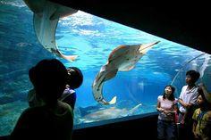 COEX Aquarium - Seoul, South Korea