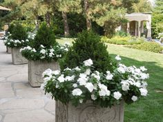 French Tangerine: ~ Small junipers with white periwinkles Outdoor Planters, Outdoor Landscaping, Outdoor Gardens, Landscaping Ideas, Container Flowers, Container Plants, Container Gardening, Garden Urns, Garden Planters
