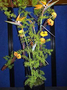 Let your imagination run wild - Preston spring show 2011- Gold Ribbon
