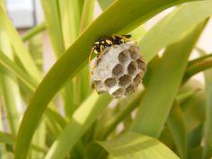 Bees vs. Wasps vs. Hornets: The Ultimate Battle | Pest Boss