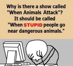 """""""When stupid people go near dangerous animals...and they have a buddy there to film the whole thing"""""""