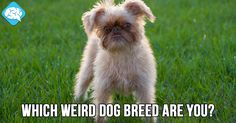 Which Weird Dog Breed Are You? | BrainFall