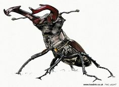 £19-£29 Stag Beetle drawing, limited edition print.