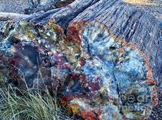Closeup of a large petrified log found in Nevada's Petrified Forest. Cool Rocks, Beautiful Rocks, Minerals And Gemstones, Rocks And Minerals, Natural Crystals, Stones And Crystals, Rock Hunting, Close Up Pictures, Petrified Wood
