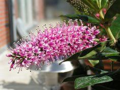 Plant op het balkon