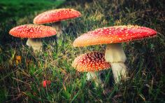 Toadstools - null