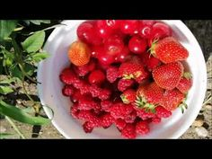 O altfel de reteta de suc din fructe /A different recipe of fruit juice - How to make? Raspberry, Strawberry, Fruit Juice, Summer Fruit, Different Recipes, Summer Recipes, Food To Make, Easy Meals, Mint
