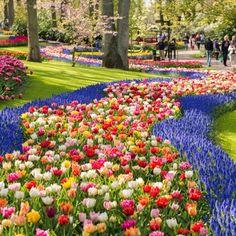 Stunning Tickets pour Keukenhof La Capitale de la Tulipe