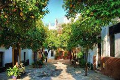 Апельсиновые деревья в Севилье, Испания.