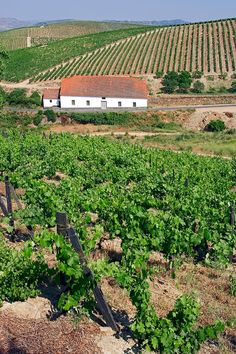 Douro Valley Vineyard, Portugal | Photo by Susan E Degginger with Pin-It-Button on FineArtAmerica