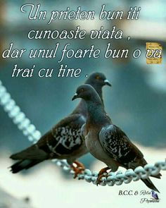 Motto, Animals And Pets, Friendship, Thoughts, Quotes, Life, Tik Tok, Google, Decor