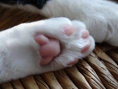 paws <3