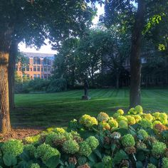A hidden gem: the yard at Martha Cook.