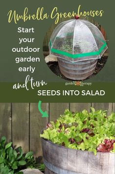 Container Gardening For Beginners Seed Starting in Mini Greenhouses - No greenhouse? No problem! Even small-space dwellers can start seeds outdoors with a few tips and these clever umbrella mini greenhouses. Outdoor Greenhouse, Mini Greenhouse, Greenhouse Plans, Greenhouse Gardening, Container Gardening, Homemade Greenhouse, Greenhouse Wedding, Pallet Greenhouse, Gardening For Beginners