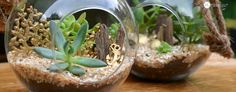 Beach Terrarium | diy succulent garden accessories with friendly plastic