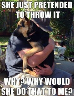 if you love dogs this should ticle your funny bone. Funny Dog Memes, Funny Animal Memes, Funny Animal Pictures, Dog Pictures, Funny Dogs, Funny Minion, Dog Funnies, 9gag Funny, Animal Quotes