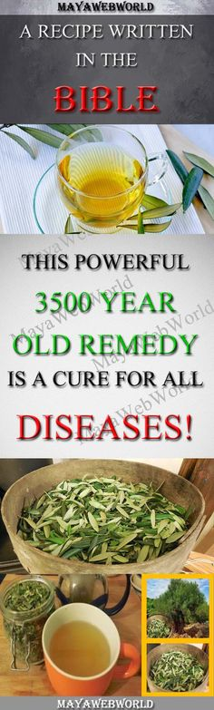 A Recipe Written in the Bible: This powerful, 3500 year old Remedy is a Cure for all Diseases! – MayaWebWorld