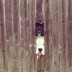 check out these curious neighbors of ours . . .