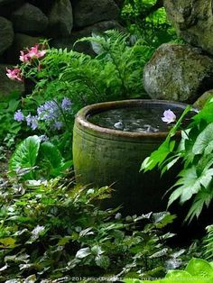 Secret garden water bowl #Water