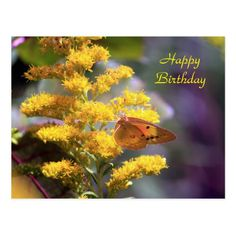 Yellow Sulphur Butterfly Birthday Postcard - birthday gifts party celebration custom gift ideas diy