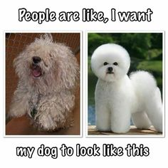 77 Best Dogs Groomer Humor Images Dog Grooming Styles Dog