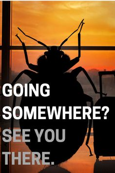 Bed bugs are excellent hitchhikers. Don't bring them home from your travels. Bring Them Home, Bed Bugs, Travel Tips, Household, Ideas, Travel Advice, Thoughts, Travel Hacks