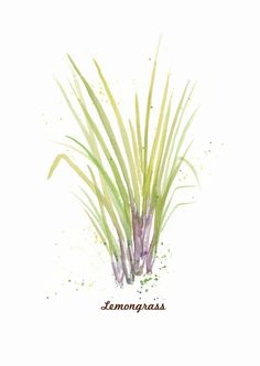 Lemongrass is analgesic and has sedative properties that helps to calm and relax muscles, reduce pain from ailments (e.g., headaches and menstrual cramps), as well as relieve jet lag and stress.