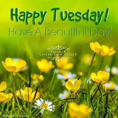 Happy Tuesday Have A Beautiful Day Summer Quote Happy Tuesday Morning, Good Morning Good Night, Good Morning Wishes, Good Morning Quotes, Happy Weekend, Happy Friday, Happy Tuesday Pictures, Happy Tuesday Quotes, Tuesday Humor
