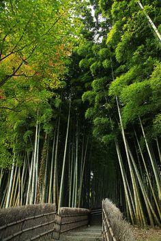 Arashiyama bamboo grove: Leave Tenryu-ji via the north gate and it takes you to the bamboo grove pretty seamlessly.