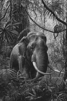 El Animal Ilustrado