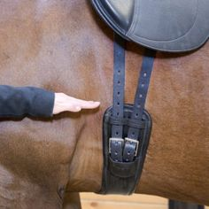 Saddle fit and girth choices – the two go hand in hand! - Equine Wellness Magazine