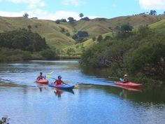 Puhoi River Canoe Hire, Auckland - Scenic kayaking trip along the beautiful Puhoi River to Wenderholm Regional Park, just 48 kilometres north of Auckland. Self-guided adventure, in safe water, perfect . Ocean Kayak, River Kayak, New Zealand Accommodation, Jackson Kayak, Best Fishing Kayak, Water Activities, Kayaking, Canoeing, Canoes