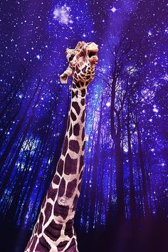 """""""Whispering Wishes"""" - The Closer You Are To The Stars, The Better Chance You're Wish Will Be Granted. Giraffe Art, Framed Prints, Art Prints, Diamond Art, New Pictures, Beautiful Landscapes, Puppy Love, Canvas Frame, Amazing Art"""
